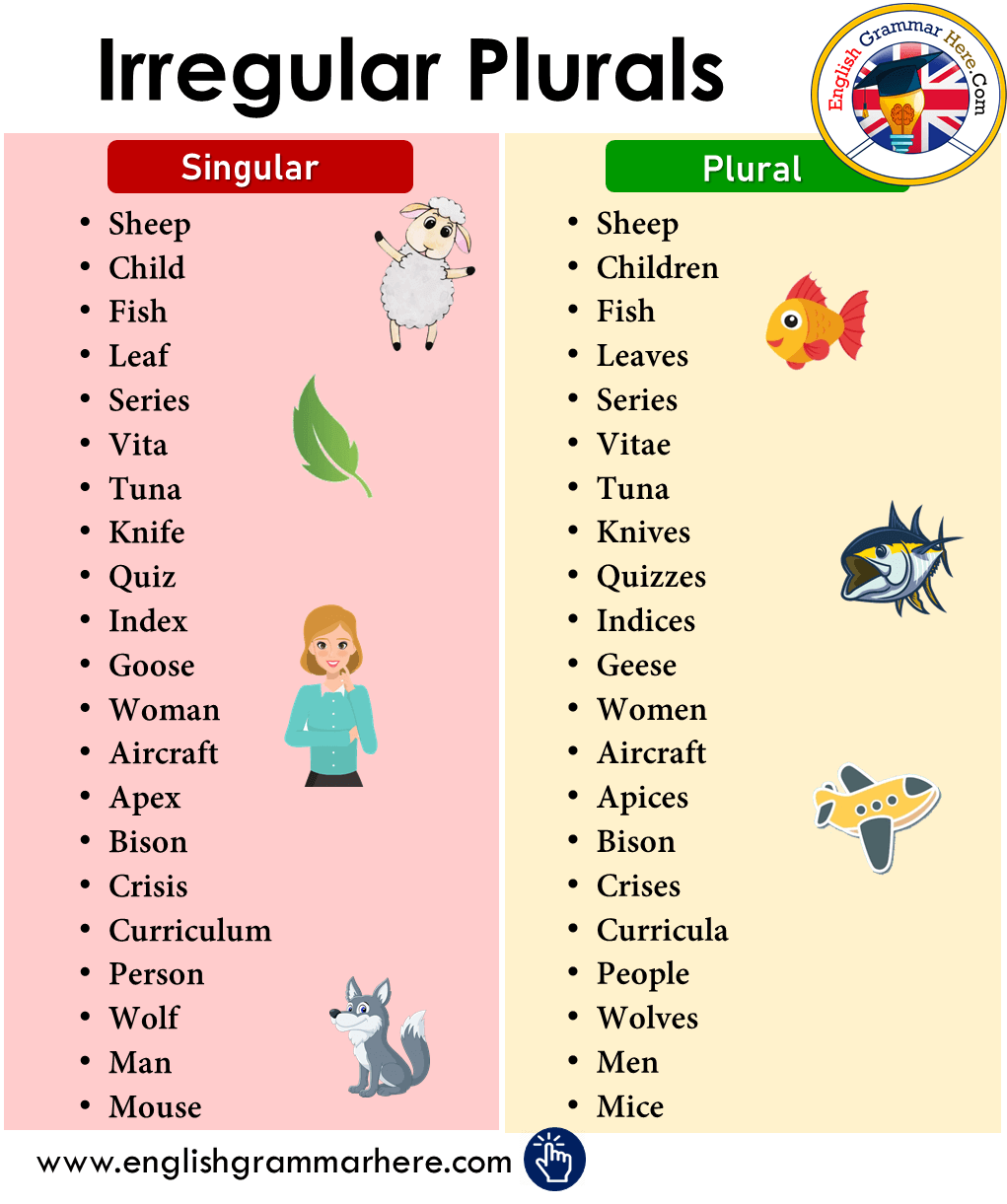 Detailed Irregular Plurals List in English