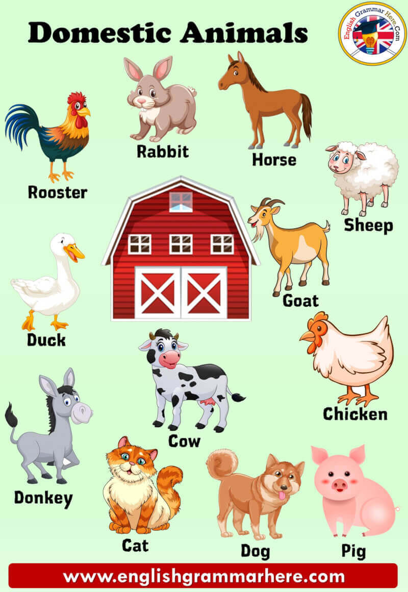Domestic Animals Names, Definition and Examples