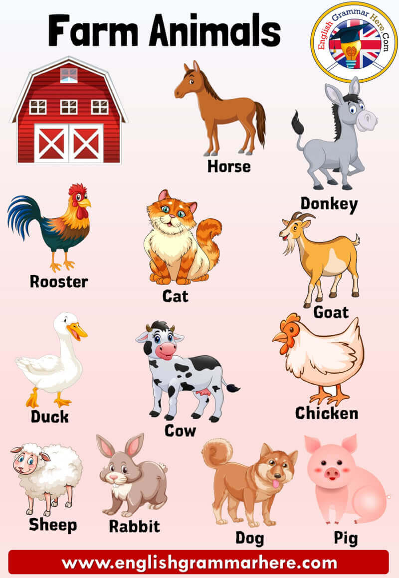 Farm Animals Names, Definition and Examples