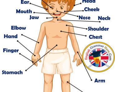 The Human Body, Parts of Human Body, Definition and Examples