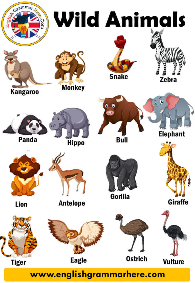 Wild Animals List, Definition and Examples