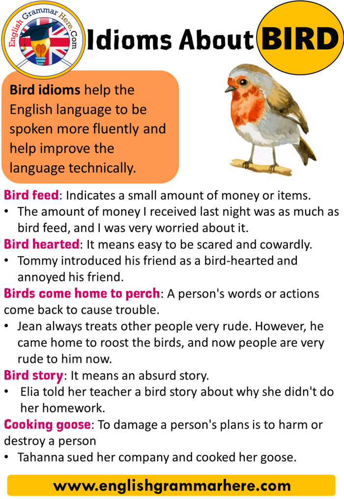English Idioms, Definition and Example Sentences with Bird